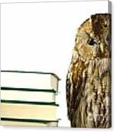 Owl At A Book Pile Canvas Print