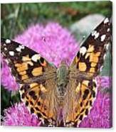 Painted Lady Butterfly Up Close Canvas Print