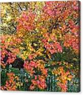 Pallette Of Fall Colors Canvas Print