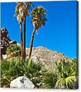 Palm Oasis On Borrego Palm Canyon Trail In Anza-borrego Desert Sp-ca Canvas Print