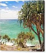 Pandanus Palm Tree Canvas Print