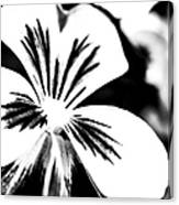 Pansy Flower Black And White 01 Canvas Print