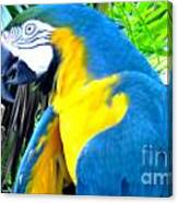 Blue Yellow Macaw. Parrot. Photo Of Bird Canvas Print