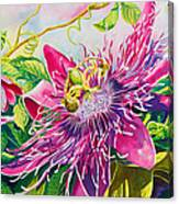 Passionflower Party Canvas Print