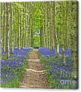 Path Through Bluebells Resembling Water Colour Canvas Print
