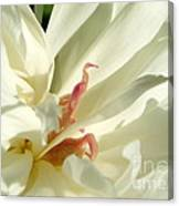 Peaceful Sentinel Of The White Peony Canvas Print