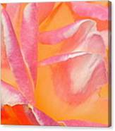 Peachy Pink Rose Canvas Print