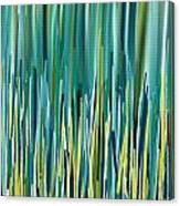 Peacock Spikes Canvas Print