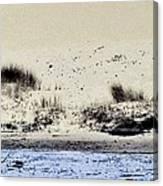 Pelican At Coorong Canvas Print