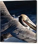 Pelican Flight Canvas Print