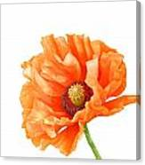 Perfect Poppy Canvas Print