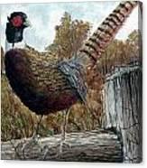 Pheasant On Fence Canvas Print