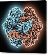 Phosphoglucose Isomerase Molecule Canvas Print