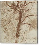 Photograph Of A Tree Canvas Print