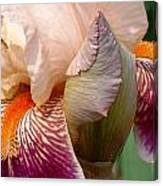 Pink And Purple Iris Canvas Print