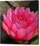 Pink Bloom... Canvas Print