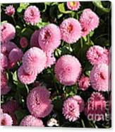 Pink Button Pom Flowers Canvas Print