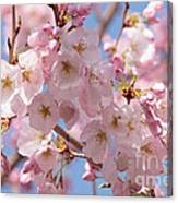 Sunlight On Spring Blossoms Canvas Print