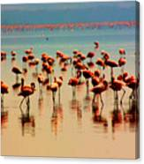 Pink Famingo Canvas Print