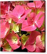 Pink Hydrangea Flowers Canvas Print