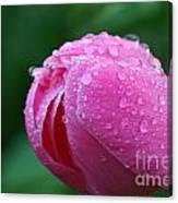 Pink Rain Drops Canvas Print