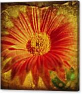 Plastered Petals Canvas Print