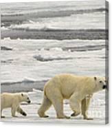 Polar Bear With Cub Canvas Print