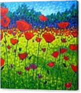 Poppy Field Canvas Print