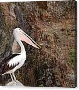 Portrait Of An Australian Pelican Canvas Print