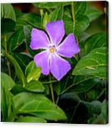 Pretty Purple Pinwheel Canvas Print