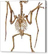 Pterodactylus, Extinct Flying Reptile Canvas Print