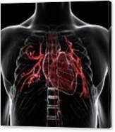 Pulmonary Arteries Canvas Print