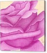 Purple Organdy Rose Canvas Print