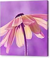 Purple Soft Canvas Print