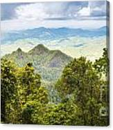Queensland Rainforest Canvas Print