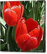 Radiant In Red - Tulips Canvas Print