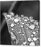 Raindrops On Grass Blade Canvas Print