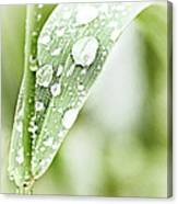 Raindrops On Grass Canvas Print