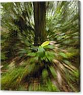 Rainforest Andes Mountains Ecuador Canvas Print