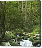 Rapids At Springtime Canvas Print