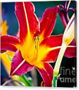 Red And Yellow Lily Canvas Print
