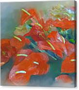 Red Anthurium Canvas Print