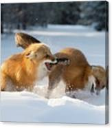 Red Foxes Interacting In Snow Canvas Print