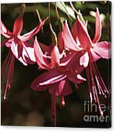 Red Fuchsia Canvas Print