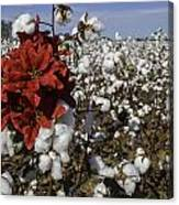 Red In The Cotton  Canvas Print