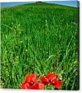 Red Poppies And Oak Canvas Print