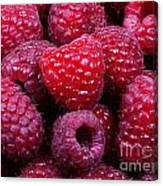 Red Raspberries Canvas Print