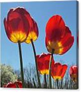 Red Tulips With Blue Sky Background Canvas Print