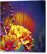 Red Yellow Blossoms 10197 Canvas Print