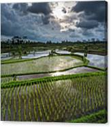 Rice Terraces In Central Bali Indonesia Canvas Print